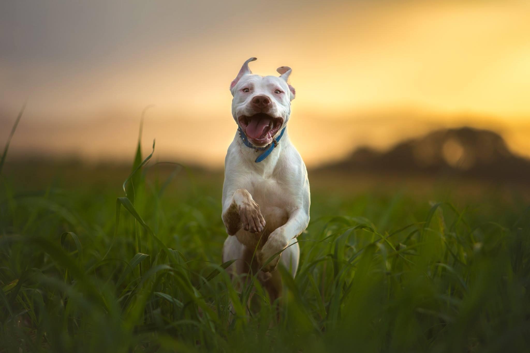 Uploads/BackgroundImage/White-Dog-Leaping.jpg